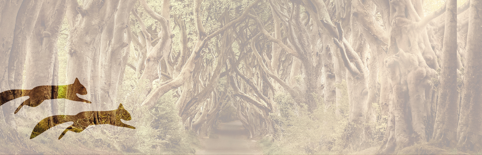 wildweksel – Kommunikation im Detail
